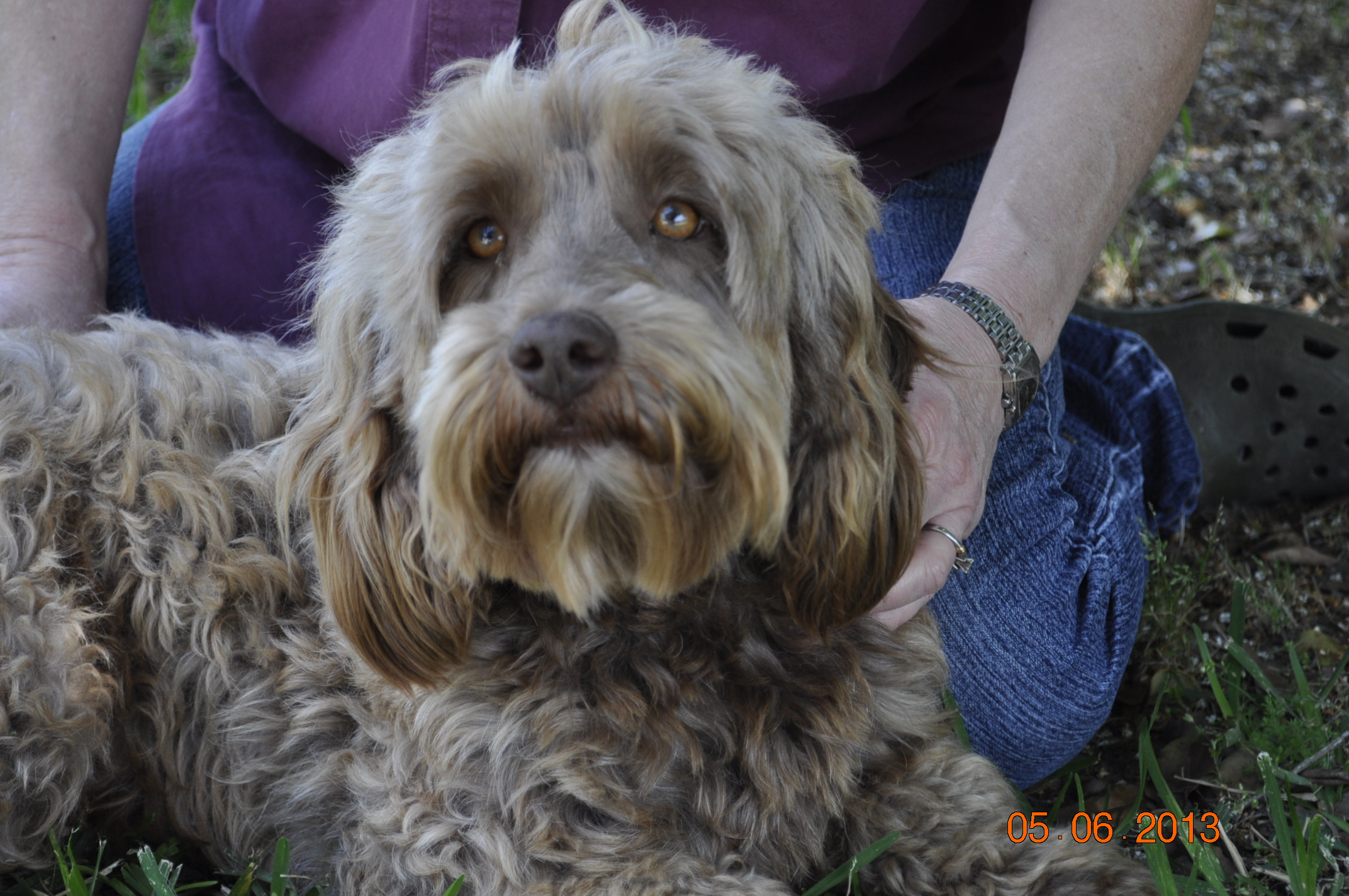 JUST LABS KENNELS - Home of Labs and Labradoodles of Southeast Texas